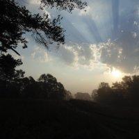 Солнца диск золотой над деревьями встал. :: Людмила Ларина