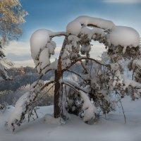 Зима! :: Виктор Гришенков