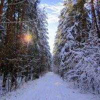 Лесной фонарь. :: Мила Бовкун