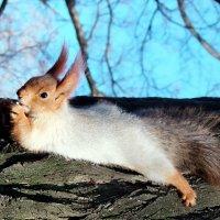 Лежу, загораю,орешки щелкаю! :: Наталья