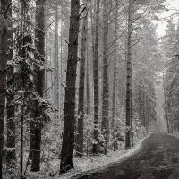 зимы начало :: Galina