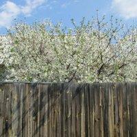 весна :: tgtyjdrf