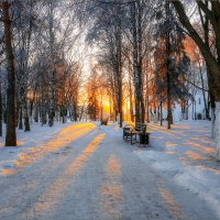 Утро в парке... :: Александр Никитинский
