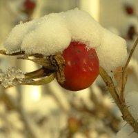 зимний плод :: Михаил Жуковский