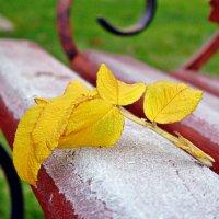 Прощай осень :: Наталия Маркелова