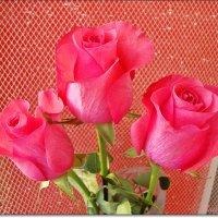 Нежные розы :: Лидия (naum.lidiya)