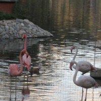 Фламинго :: Дмитрий Никитин