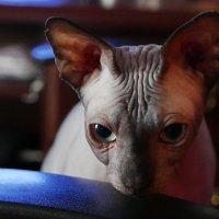 Грустный кот :: михаил кибирев