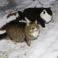 Сытые бездомные кошки. :: Михаил Елочкин