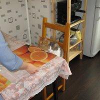 А что сегодня на завтрак? :: Larisa Ereshchenko