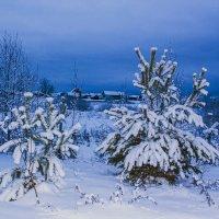 Деревья в пушистом снегу.2015 :: Артём Бояринцев