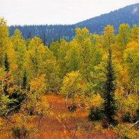 Осень в согре :: Сергей Чиняев