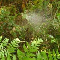 Паутины стало больше, пауки стали крупнее... :: Виктор Мухин