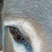 лошадиная грусть :: Юлия Денискина