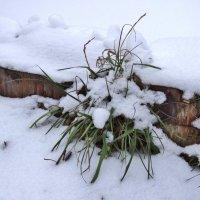 выпал снежок сегодня.. :: Валентина. .