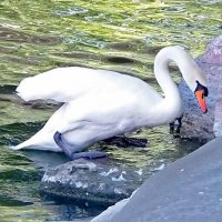 Лебедь и скалы. :: Наталья