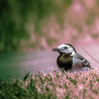 Птичка. :: Валерий Изотов