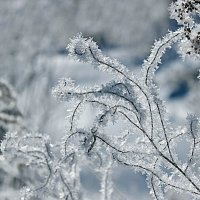 Снежные кружева :: И.В.К. ))