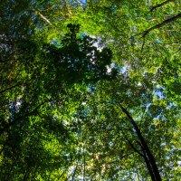 Лесной уют :: Игорь Герман