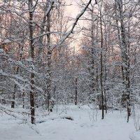 Лес на закате :: Владимир Протасов