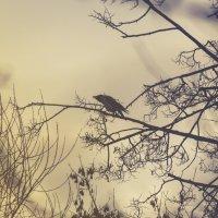 Закат и ворона :: Константин Сафронов