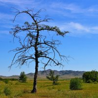 Дерево :: Сергей Чиняев