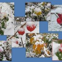 Первый снег! :: Ирина Олехнович