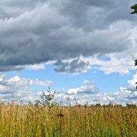 облака над полем :: Елена