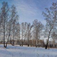 зима как зима. :: Николай Мальцев