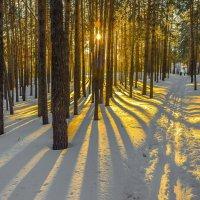 Бросай курить, вставай на лыжи!.. :: Андрей Поляков