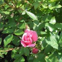 Весенний расцвет :: Валентина Малютина