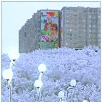 Североморск - город молодых мам... :: Кай-8 (Ярослав) Забелин