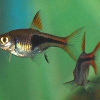 А я рыба, я рыба, я живу в океане... ))) :: sergej-smv