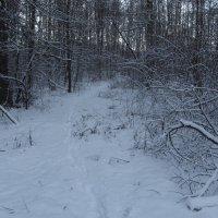 Несмотря на санкции в Москве - зима :: Андрей Лукьянов
