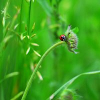 Мир насекомых :: Андрей Куприянов