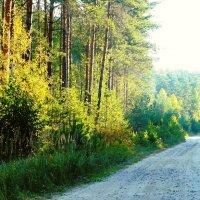 лесная дорога :: Леонид Натапов