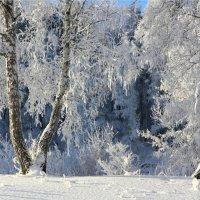 Снежная картина :: Мария Кухта