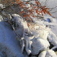 Первые морозы. :: Мила Бовкун