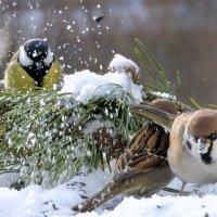 Эх снег снежок ...!!!!!! :: Hаталья Беклова