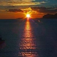 солнечно-морская елка :: viton