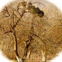 Дерево :: Леонид Шаян