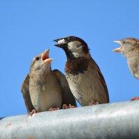 требовательная  молодежь :: linnud