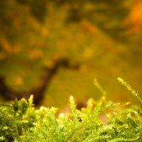 Мохнатый лес :: Dmitriy Stoyanov