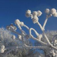Скульптуры зимы :: Мария Кухта