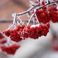 С праздником Николы зимнего! :: Ната Волга