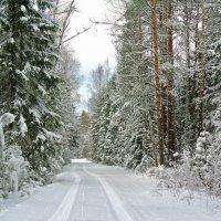 Прогулка по лесным дорогам..а через два дня снег начал таять,пришла оттепель.. :: Алла Кочергина