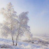 Белая красавица :: Анатолий Иргл