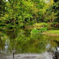Есть в зоопарке славный пруд .. :: Alexander Andronik