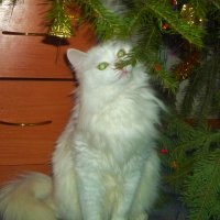 Значит вот как пахнет Новый год :: Владимир Ростовский