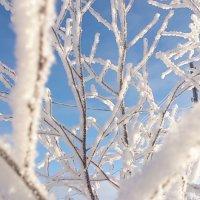Красота зимы :: Елена Гусева